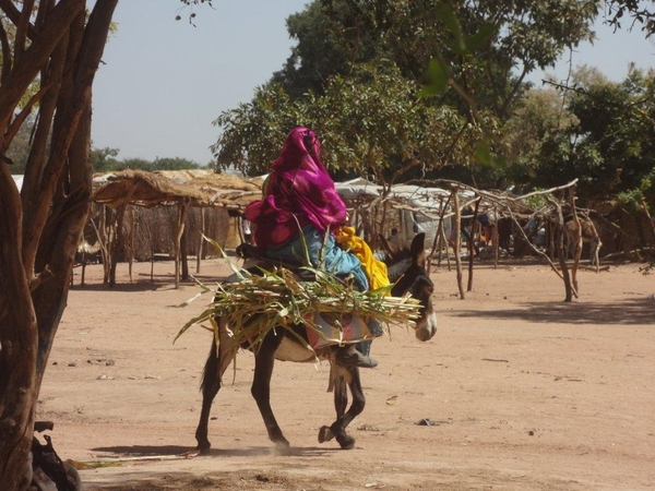 At least 50,000 refugees have arrived in Chad in 2013, joining 250,000 who have already been here for the past decade © Amnesty International.
